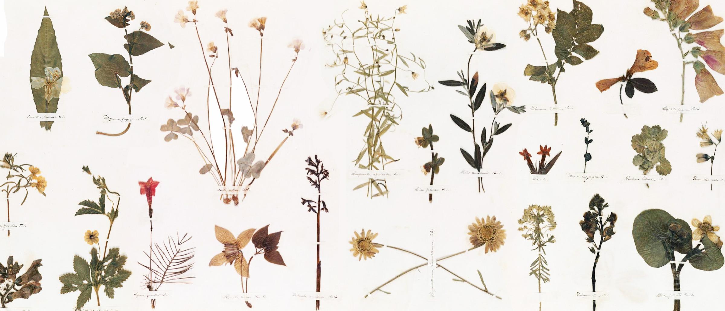 Wallpaper Girl Boy Friend The Planthunter Emily S Herbarium