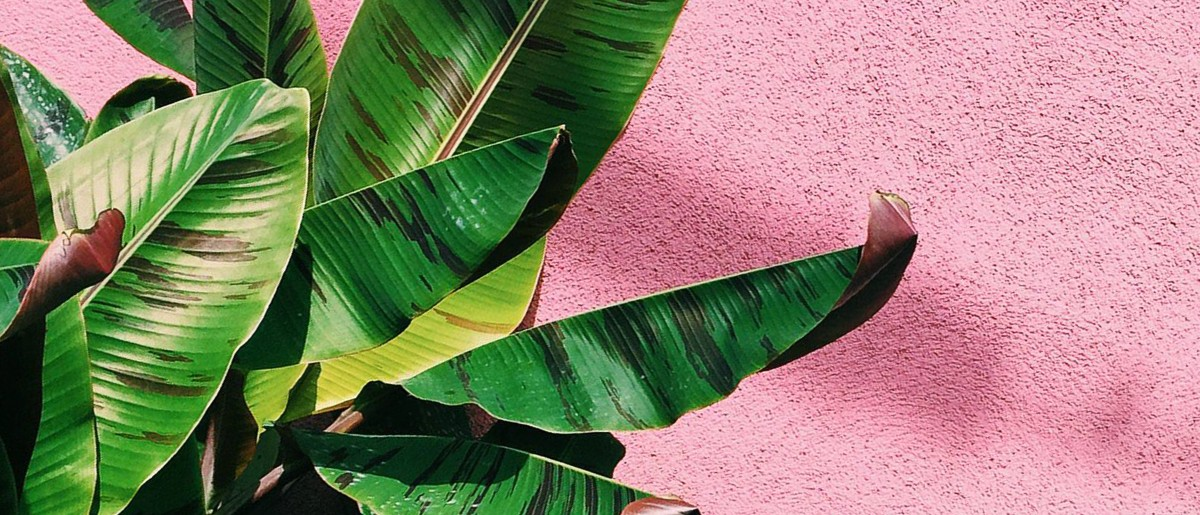 Once Upon A Time Wallpaper Iphone The Planthunter Plants On Pink An Instagram Community