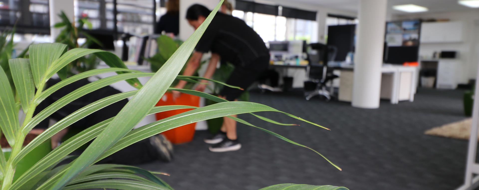 Indoor Plants For The Office Resetting A Takapuna Office With Indoor Plants The Plant People