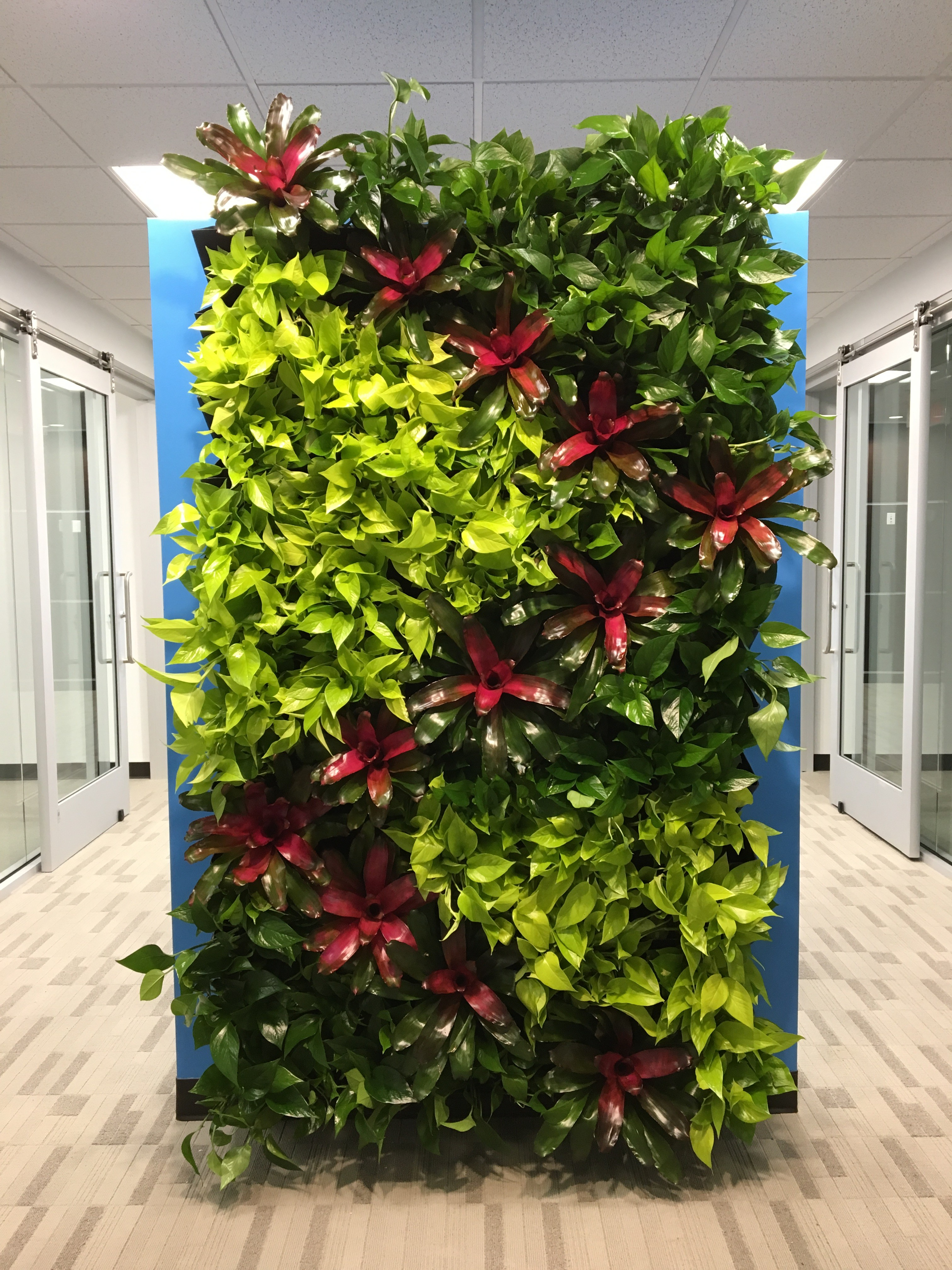 Green Living Green Living Walls Are Perfect For Any Space Plant Pros