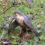A male Sparrowhawk with his kill (Photo Credit: Darkeyedboy).