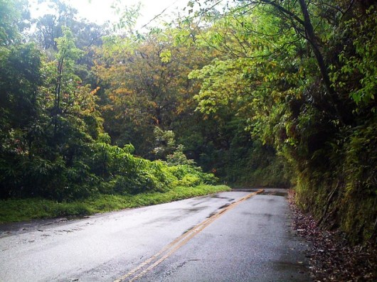 Maui's jungly, winding Hana Highway (Photo by Melanie Wynne)
