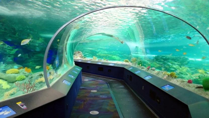 Ripley's Aquarium of Canada. (Photo courtesy of Shutterstock)