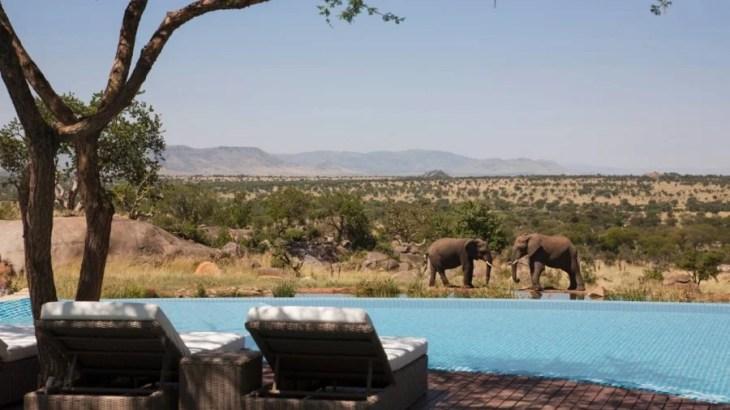 Swim with unique views of elephants