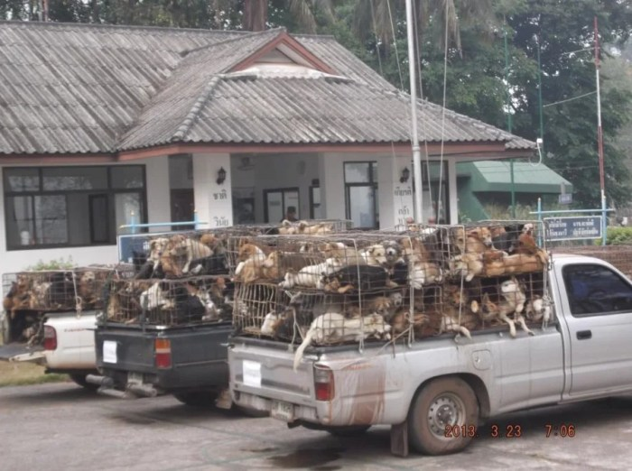 The Before: illegally traded dogs. Photo by Soi Dog Foundation.