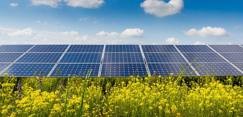 Solar panel array featured shutterstock 178694141