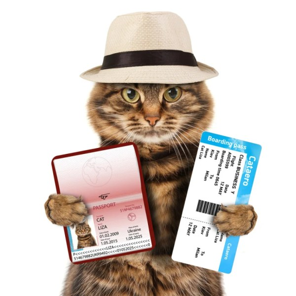 Some cats are more ready to travel than others. (Photo courtesy of Shutterstock)