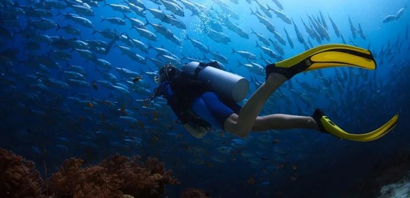 Scuba Diving featured shutterstock 141494932