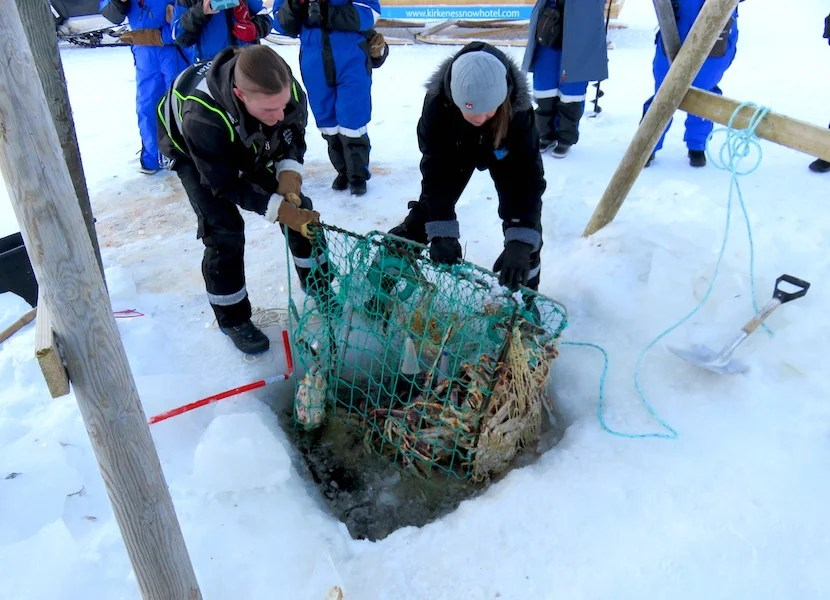 Ice fishing and king-crab trapping are some of the excursions offered by the Kirkenes Snowhotel.