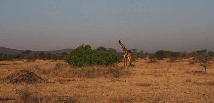 A peek at my snap story from safari in Tanzania.