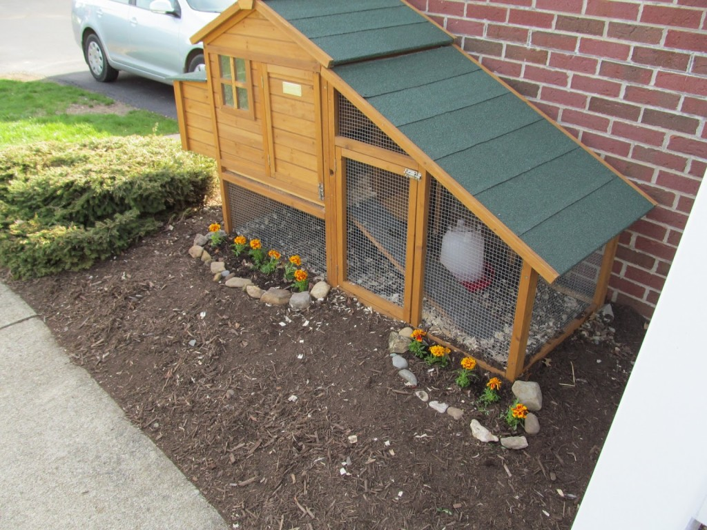 Diy Walk In Chicken Coop 8 Inspiring Chicken Run Plans You Can Build Easily The