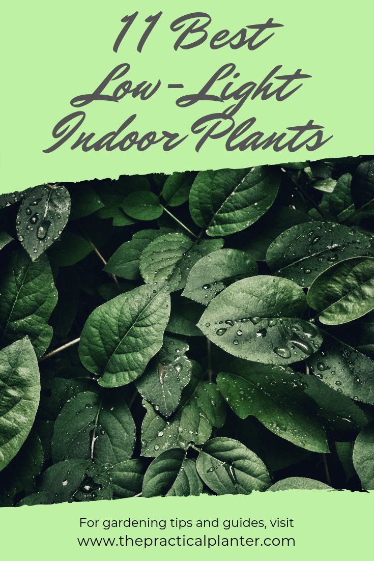 Indoor Plants For Low Light 11 Best Indoor Plants That Thrive In Low Light Environments The