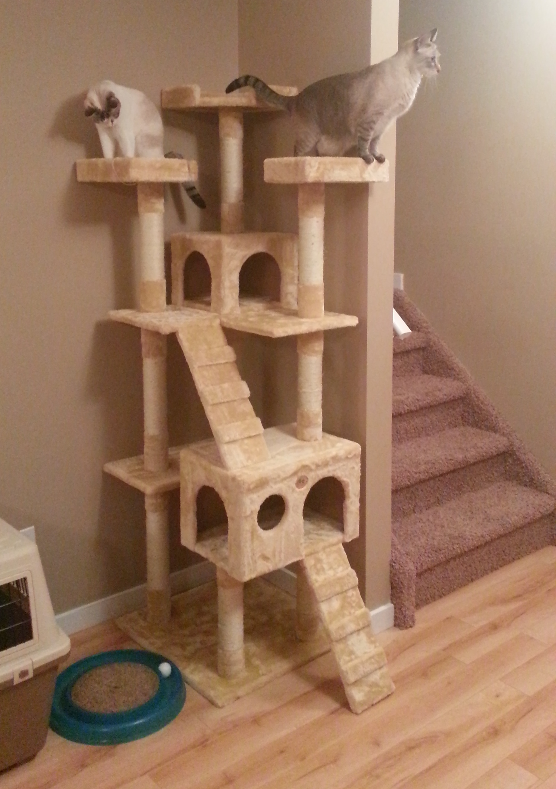 Cat Tree Houses Indoor Cat Tower The Professional Nappers