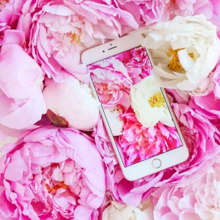 peonies wallpaper-31