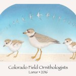 Colorado Field Ornithologists Holding 54th Annual Convention May 5-9 In Lamar