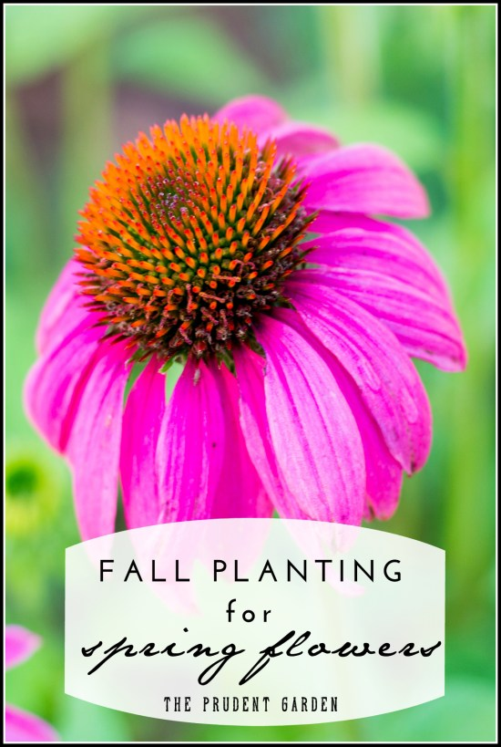 Fall Planting For Spring Flowers