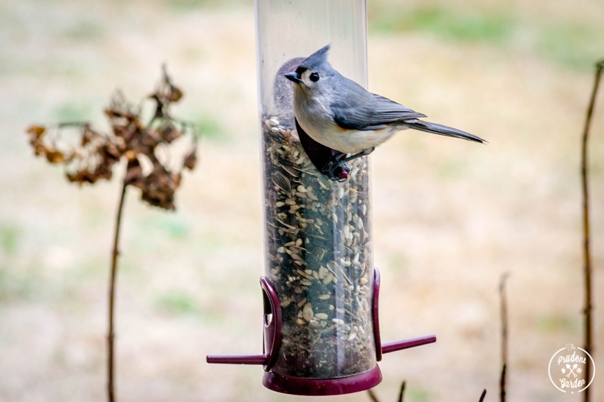 The Great Backyard Bird Count