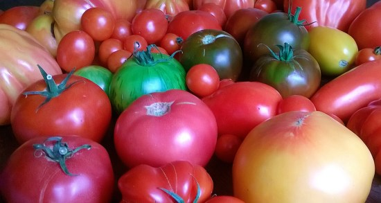 How to Select the Right Tomato for Your Garden