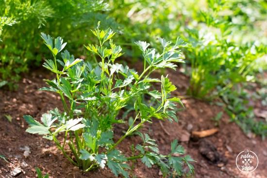 Herb Potato Salad