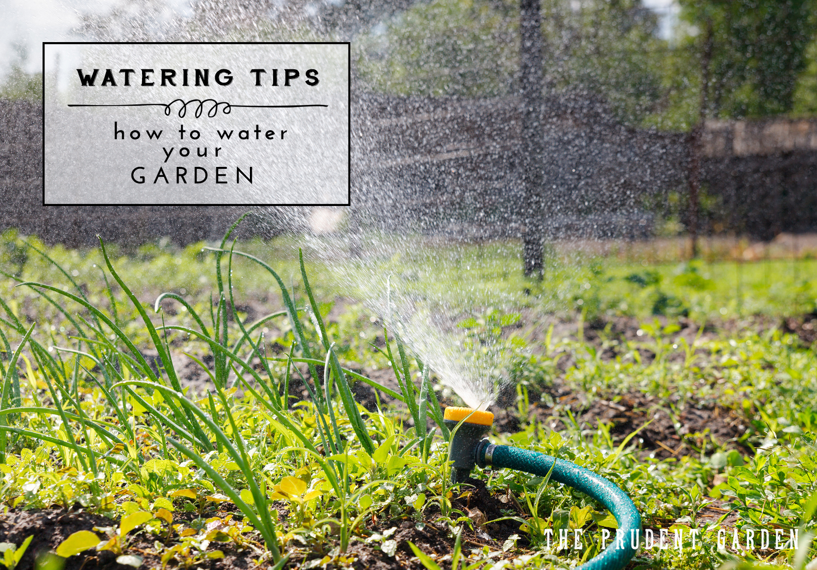 Good Watering Habits Are Important For Successful Gardening. Here Are A Few  Strategies To Keep