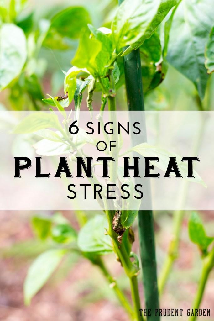 Plant Heat Stree