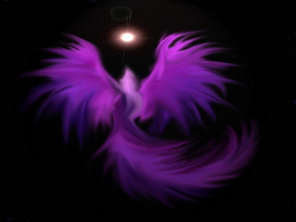 Violet Flower Hd Wallpaper The Purple Phoenix Home