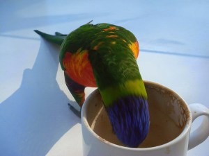 coffee parrot