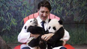 Trudeau pandas