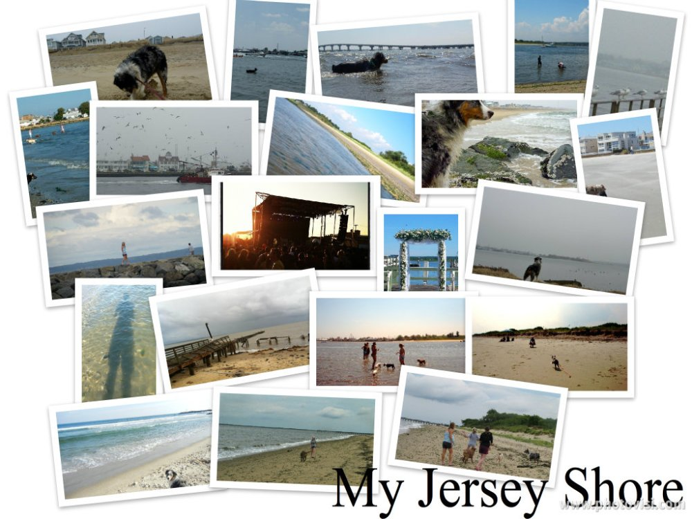 The Real Jersey Shore