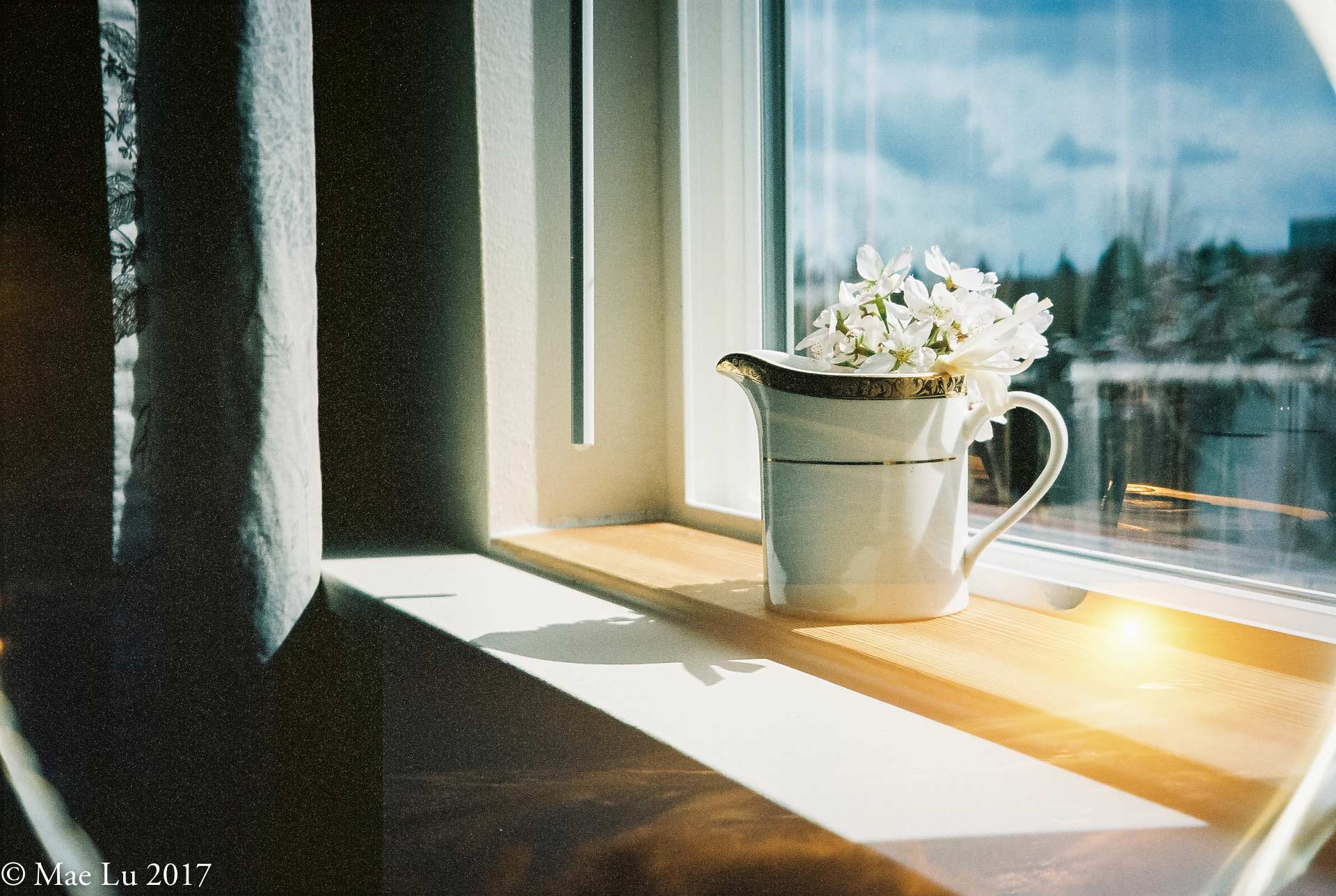 thereafterish film is not dead photo of cherry blossom flowers in a cup on windowsill