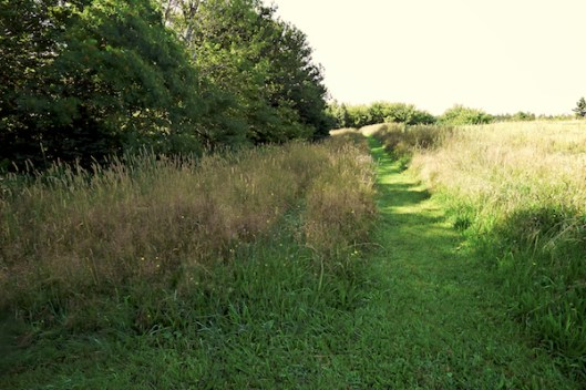 Cape Breton, Judique, Old Farm, Meadow