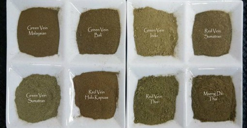 Best Kratom Strain? How to Find the Kratom Strain Which Suits You Best