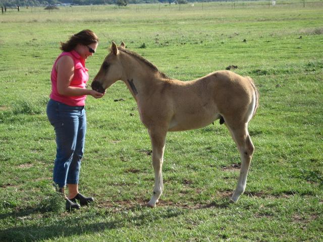 Dana Merritt, Riding Instructor in Post Falls, Idaho