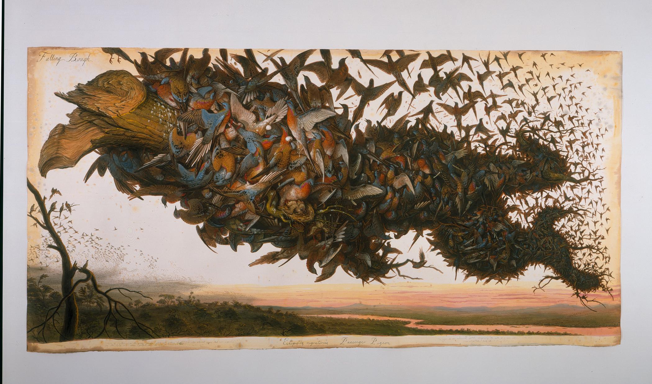 Hd Pigeon Wallpaper Walton Ford The Rig