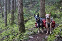 Dog Backpacking Bed  Check Now Blog