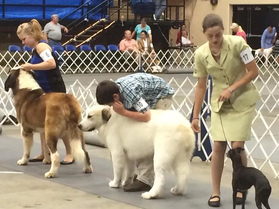 Roanoke Dog Shows