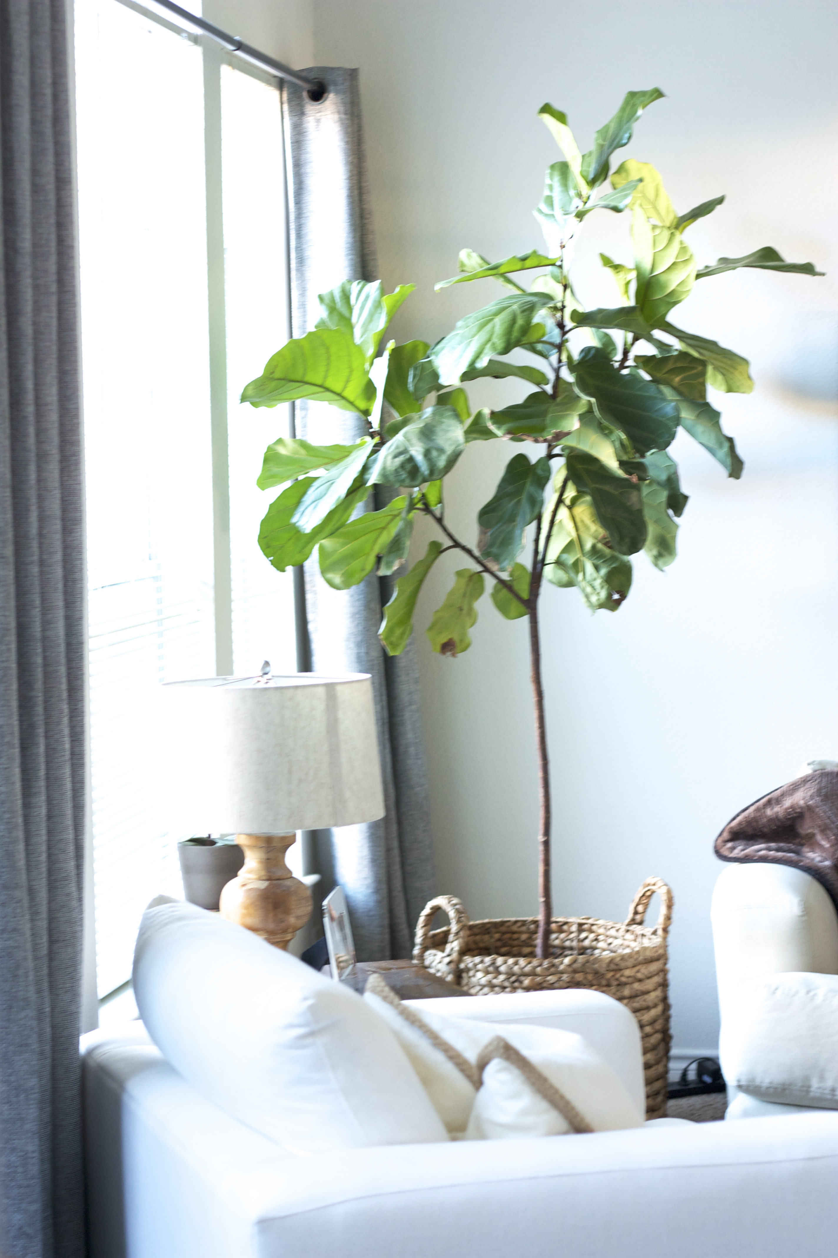 Popular Indoor Tree Plants 3 Indoor Plants You Probably Cant Kill Sarah Linden