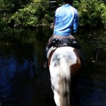 Walking in a creek for the horses to get a drink