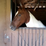 Dakota in his stall