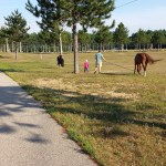 Taking the horses for a walk