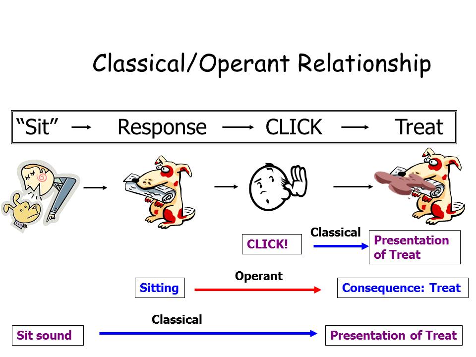 Deconstructing the Click \u2013 The Science Dog - examples of classical conditioning