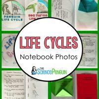 Life Cycles Notebook Photos