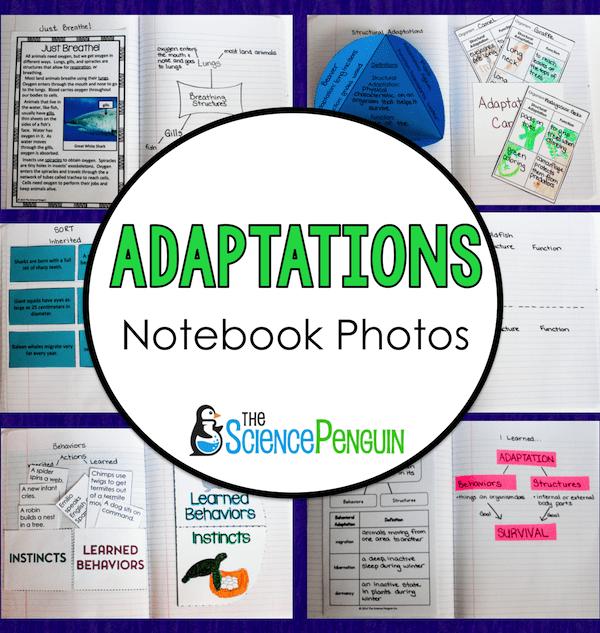 Adaptations Notebook Photos