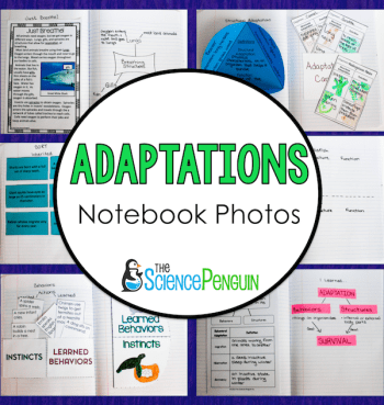 Adaptations Science Notebook Photos