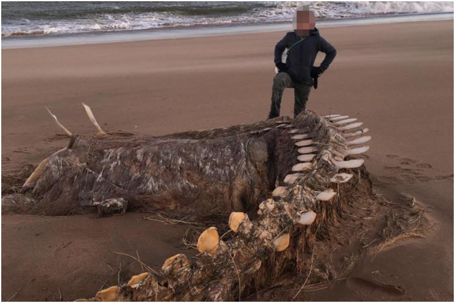 Mystery Surrounds Nessie Creature Washed Up On Aberdeenshire Beach During Storm Ciara