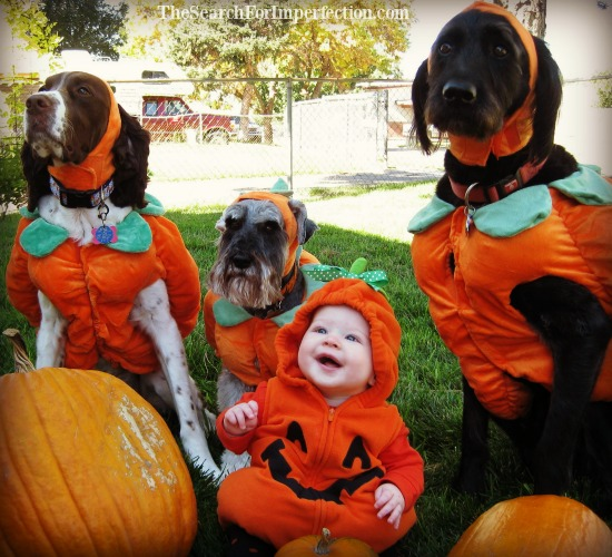 Dogs and Baby Pumpkin Patch