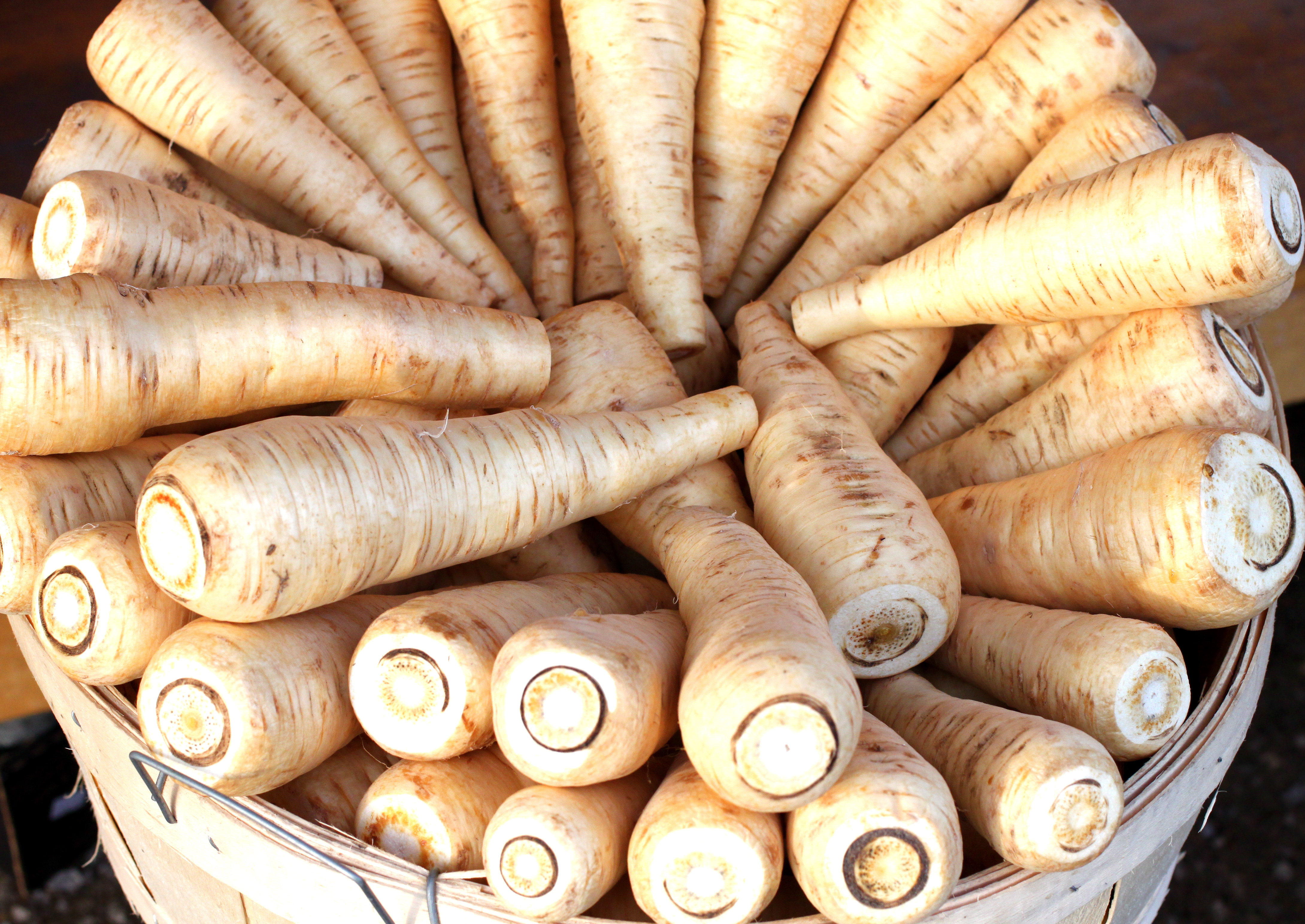 Pastinaken Pflanzen Parsnips The Seasonal Gourmet