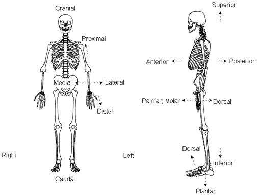 medical terminology diagram
