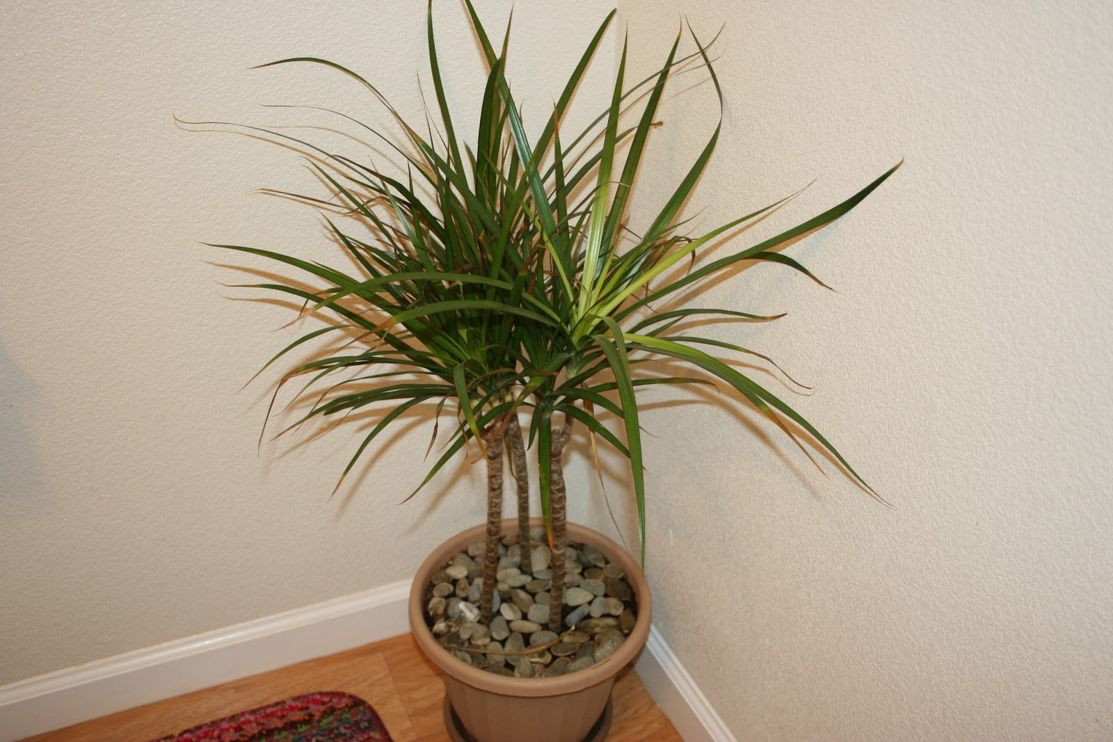 Indoor Tall House Plants Top 10 Tropical House Plants Any One Can Grow The Self