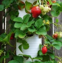 20 Inspiring PVC Pipe Projects for Gardeners  The Self ...